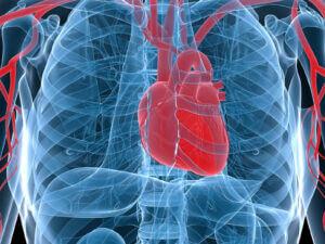 Elderly Care in Daphne AL: Stress on Heart Failure
